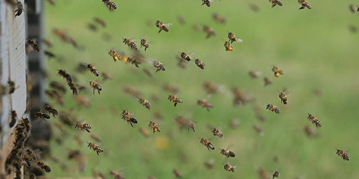 Beekeeping Series: Colony Management & Swarm Control - SOLD OUT