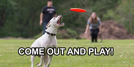 Brooklyn Dog Frisbee League, Family Friendly Fun – Come Out and Play tickets