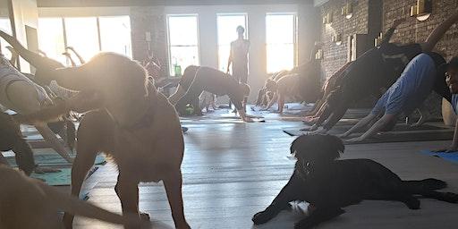 Puppy Yoga with Amrita Yoga & Wellness North