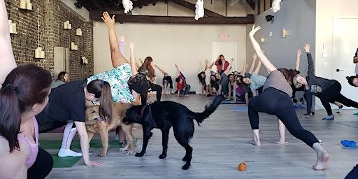 Puppy Yoga with Amrita Yoga & Wellness SOUTH