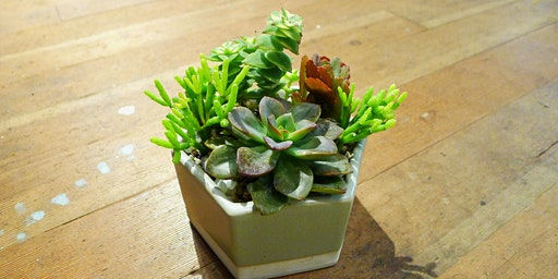 Discover Succulents Class - Sun, Mar 15th