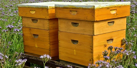 Beekeeping basics tickets