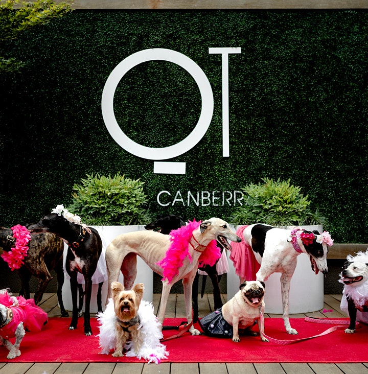 Barkfest: QT Canberra X The Social Dog Company image