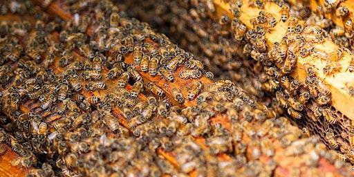Beekeeping Workshop: Intermediate Beekeeping Techniques