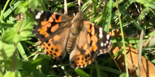 Hospice House Memorial Butterfly Release