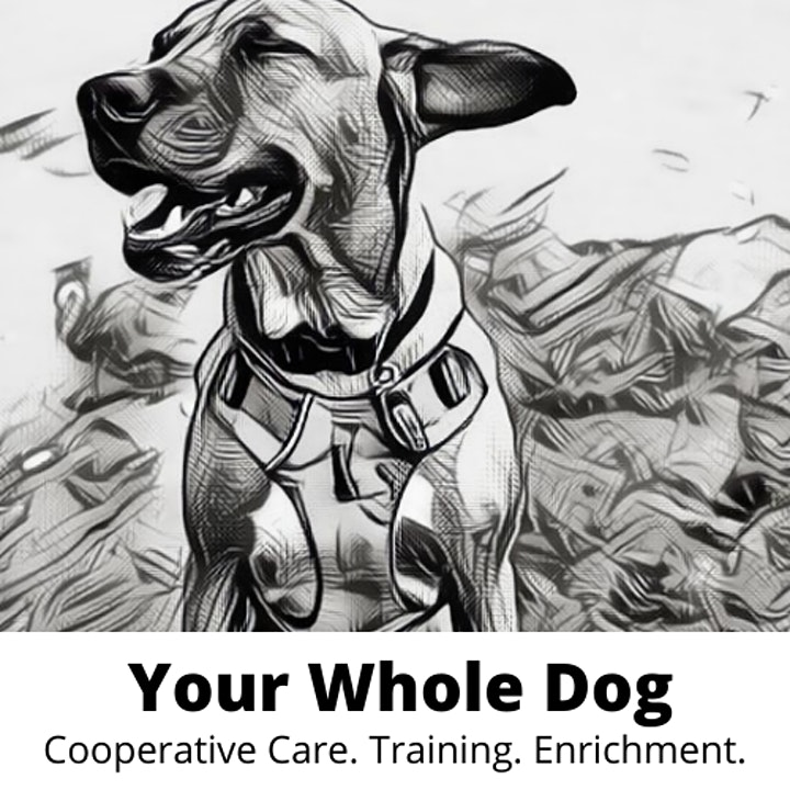 Canine Arthritis Management Workshop Wellington image