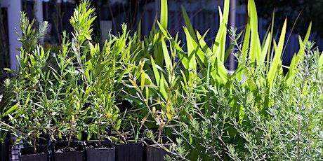 Native Plant Propagation Workshop tickets
