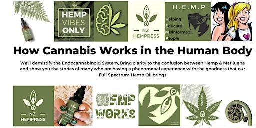 How Cannabis Works In The Human Body Hamilton