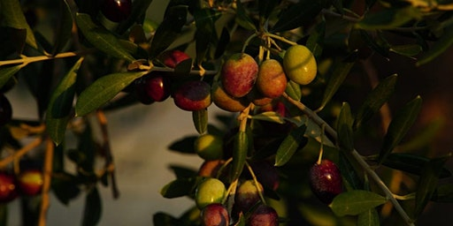 Olive Oil Immersion Tour - All About Olive Oil, Peloponnese, Greece