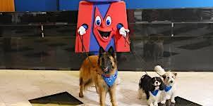Metro Bank MK Dog Walk