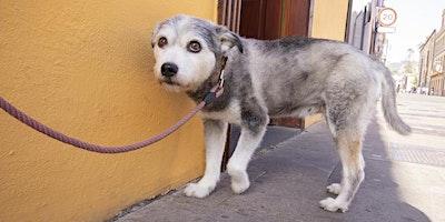 Violence link: Animal Abuse and Woman Abuse/Le lien entre la cruauté envers les animaux et la violence faite aux femmes
