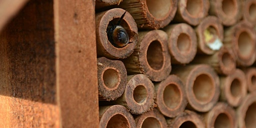 Free Mason Bee Workshop