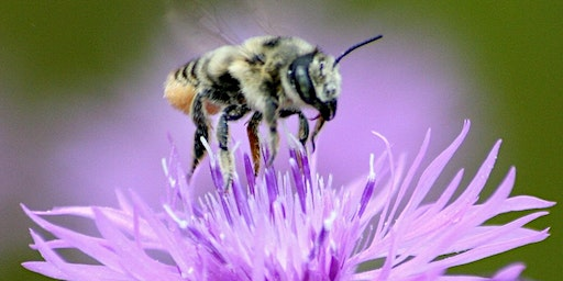 Perennial Plants for Pollinators, Call library to register: 727-943-4922