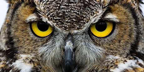 Outdoor Explorers: All About Owls tickets