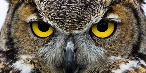 Outdoor Explorers: All About Owls