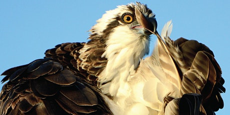 2020 Southwest Florida Birding Seminar tickets