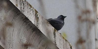 RSPB Big Garden Bird Watch at Kingston Uni - 75 Pe