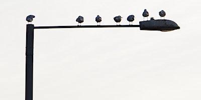 RSPB Big Garden Bird Watch at Kingston Uni - River