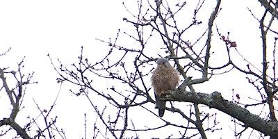 RSPB Big Garden Bird Watch at Kingston Uni - Roeha