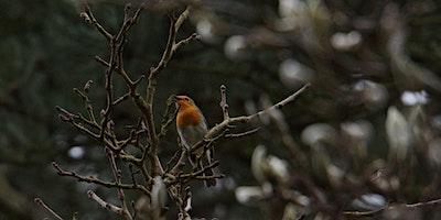 RSPB Big Garden Bird Watch at Kingston Uni - Doric