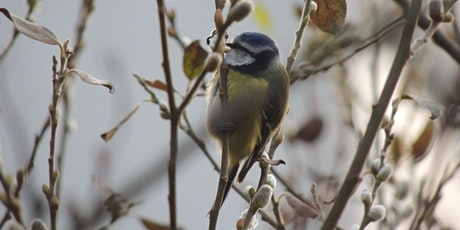 RSPB Big Garden Bird Watch at Kingston Uni - Kingston Hill Coombehurst pond tickets