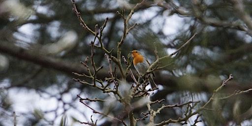 RSPB Big Garden Bird Watch at Kingston Uni - Clay Hills Halls - the tree lines