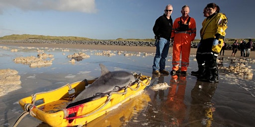Live Stranding Course Galway