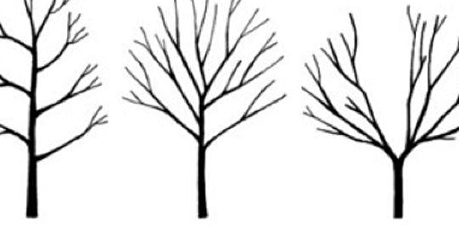 Fruit Tree and Berry Bush Pruning Class- South Seattle