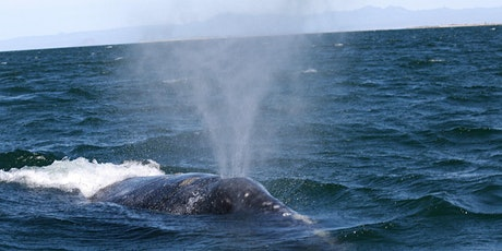 Whale Watching Wonders  tickets