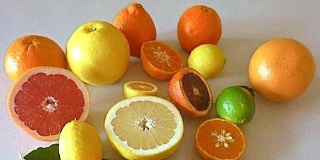 Can We Grow Healthy Citrus? Learn About THE  Cultivars, Pests and Diseases. Dr. Zekri. Saturday March 21, 2020 tickets