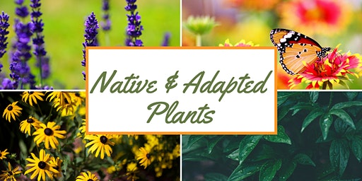 Native & Adapted Plants