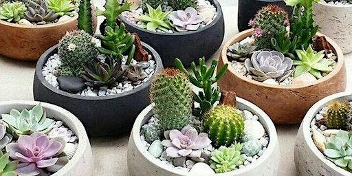 ABAC Horticulture Club Succulent Garden Class