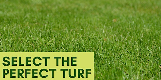 Select the Perfect Turf