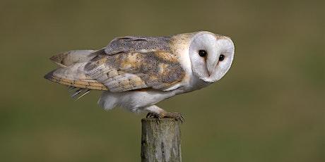 Barn Owl Photo Workshop tickets