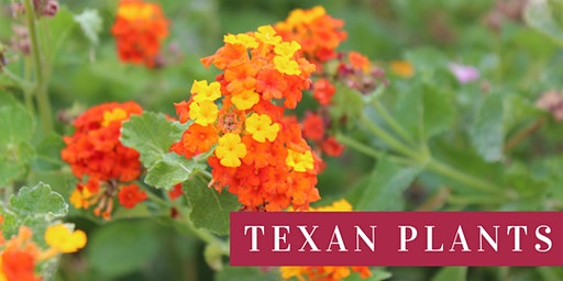 Texan Plants