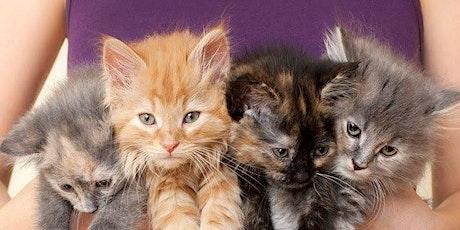 Kitten Fostering Workshop tickets