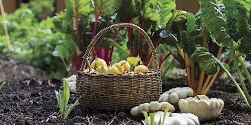 Preparing for an Autumn Vegetable Garden