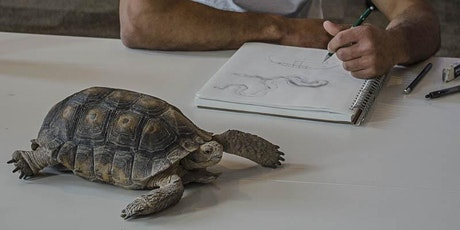 Session 4, TORTOISES & FRIENDS - Drawing Skills for Field Notebooks (Tumamoc Art & Science Course) tickets