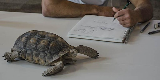 Session 4, TORTOISES & FRIENDS - Drawing Skills for Field Notebooks (Tumamoc Art & Science Course)