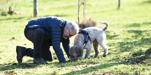 Truffles: Harvesting with Truffle Dog(s)