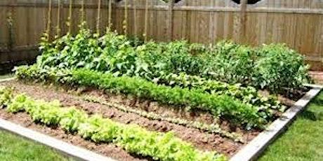 Gardening for Beginners & No Dig Gardens tickets