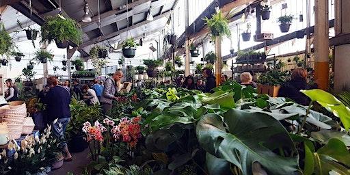 Adelaide - Huge Indoor Plant Warehouse Sale - Summertime Madness