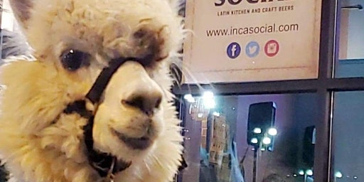 Dinner with Alfajor the Alpaca at Inca Social Sunday