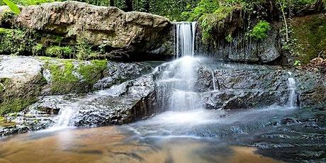 Cascade Springs Nature Hike tickets