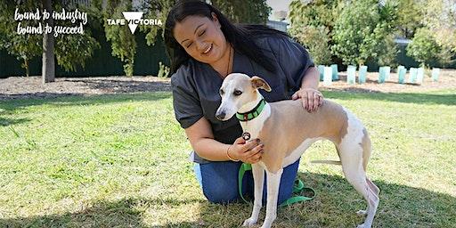 Animal Studies and Veterinary Nursing Information Session