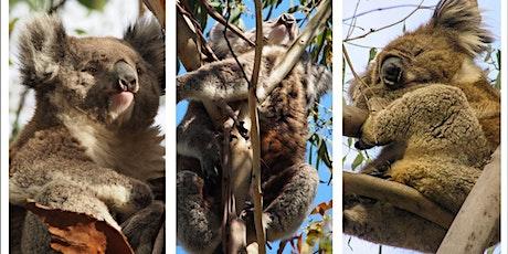 Koala Forum - Finding ways to support koala conservation tickets