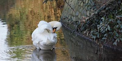 RSPB Big Garden Bird Watch at Kingston Uni - Middl