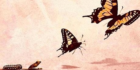 El Poder de la Gratitud y Los 5 niveles de transformación entradas