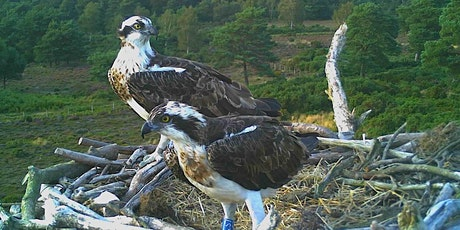 Poole Harbour Osprey Translocation Project Talk tickets