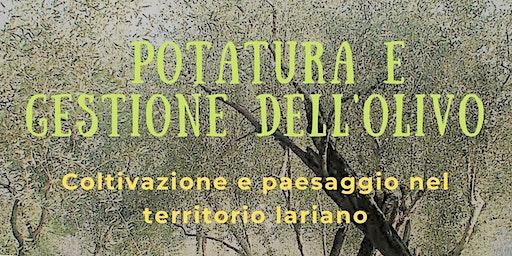 Potatura e Gestione dell'olivo - Coltivazione e paesaggio nel territorio lariano